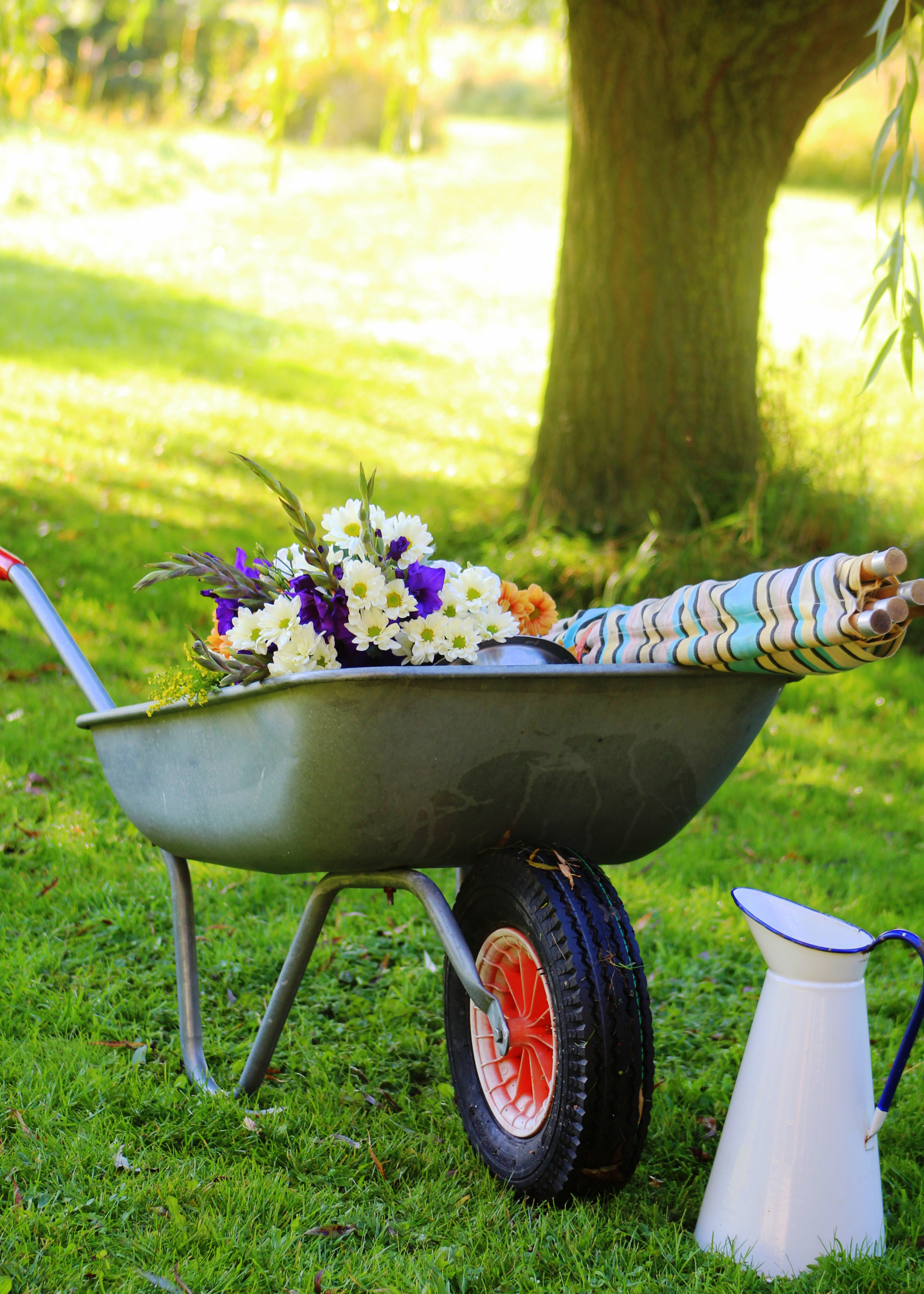 Wheelbarrow and flowers