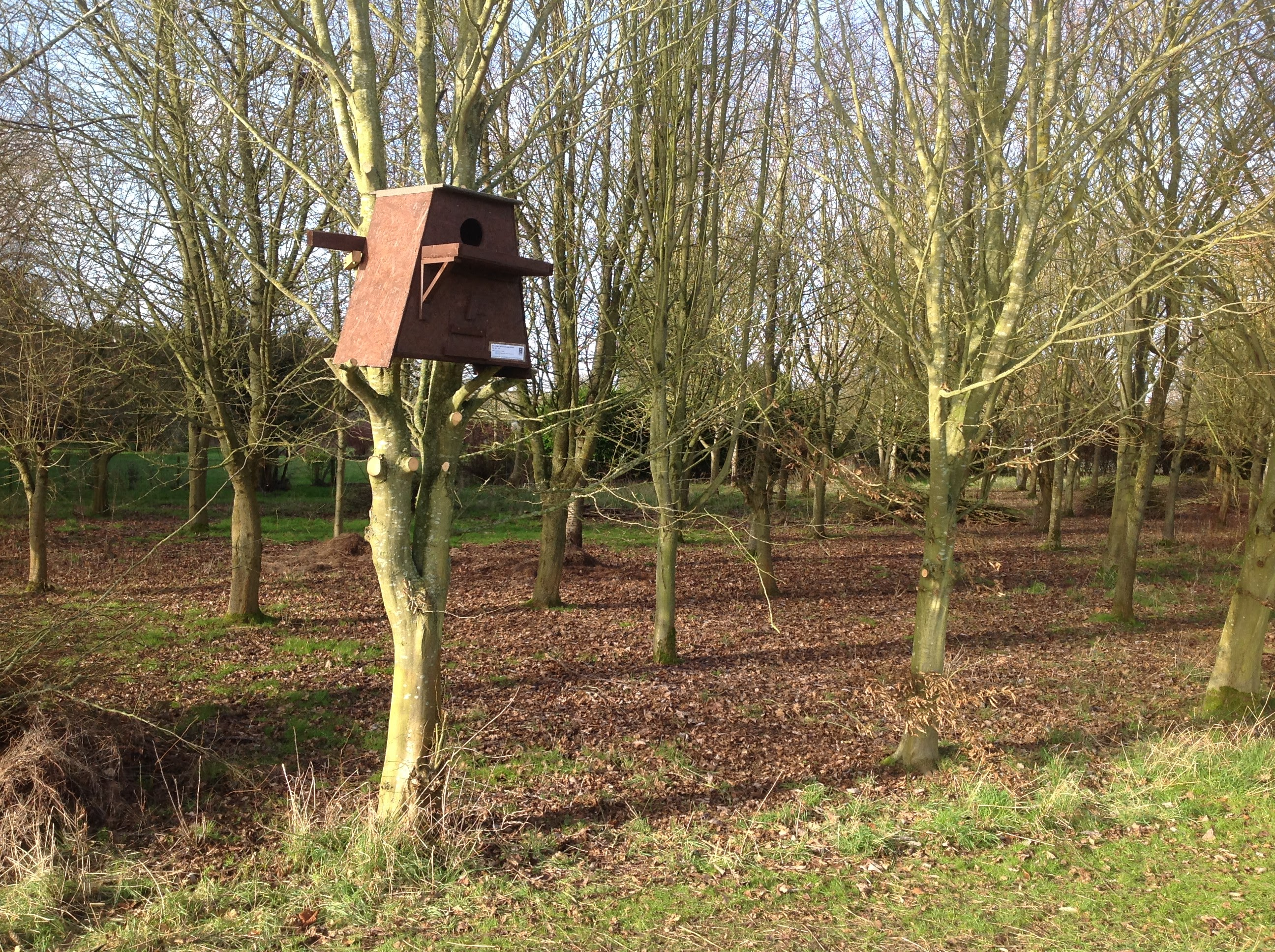 Owl box at Borleymere Shepherd's Hut